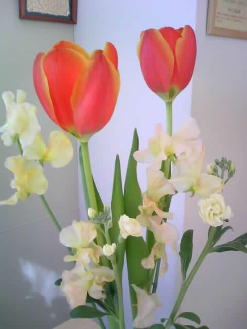 1月15日の花